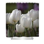 White Tulips 9169 Shower Curtain