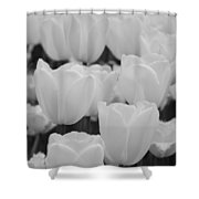 White Tulips B/w Shower Curtain