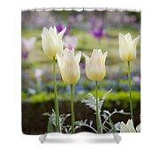 White Tulips In Parisian Garden Shower Curtain