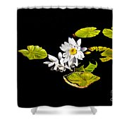 White Water Lilies Shower Curtain by Frances Hattier
