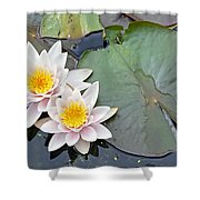 White Water Lilies Netherlands Shower Curtain by Jelger Herder
