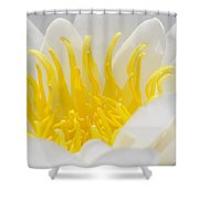White Waterlily Detail Shower Curtain