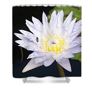 White Waterlily With Fly...   # Shower Curtain