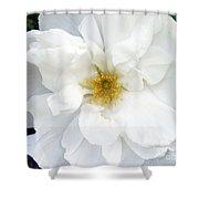 White Wild Rose Shower Curtain