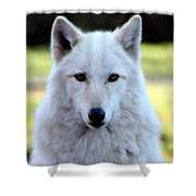 White Wolf Close Up Shower Curtain