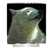 White Wolf In The Shade Shower Curtain
