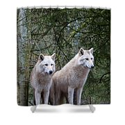 White Wolf Pair Shower Curtain