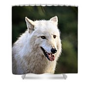 White Wolf Pant Shower Curtain