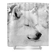 White Wolf Shut Eye Shower Curtain
