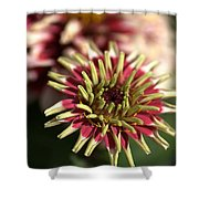 White Zinnia Shower Curtain