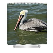 Whiteheaded Pelican Shower Curtain