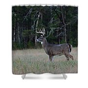 Whitetail Buck 1 Shower Curtain
