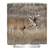 Whitetail Buck On The Move Shower Curtain