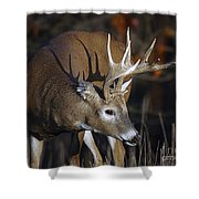 White-tailed Deer Antler Shadow Shower Curtain