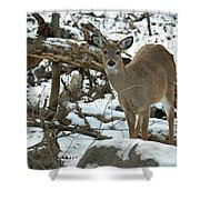 Whitetail Deer Doe In Snow Shower Curtain