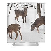 Whitetail Deer In Snowy Woods Shower Curtain