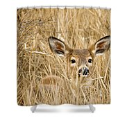 Whitetail In Weeds Shower Curtain