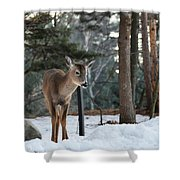Whitetail In Woods Shower Curtain