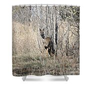Whitetail Undercover Shower Curtain