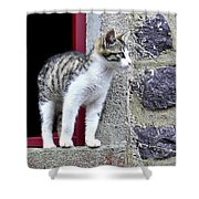 Who Goes There - Kitten Shower Curtain