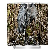 Who Is There - Great Blue Heron Shower Curtain