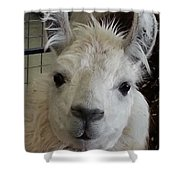 Who Me Llama Shower Curtain