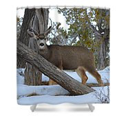 Who Me?  Oh Deer Shower Curtain
