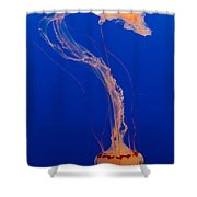 Who What Where When Purple Striped Jelly 1 Shower Curtain