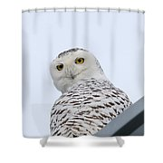 Who You Lookin' At? Shower Curtain