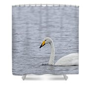 Whooper Shower Curtain