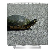 Why Did The Turtle Cross The Road Shower Curtain