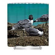 Why You Looking? Shower Curtain