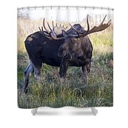 Wide Guy Shower Curtain