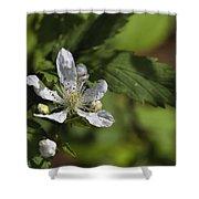 Wild Alabama Blackberry Blossom Shower Curtain