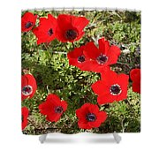 Wild Anemone Flowers In A Spring Field  Shower Curtain