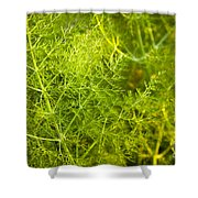 Wild Aniseed Shower Curtain