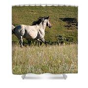 Wild Appaloosa Running Away Shower Curtain