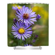 Wild Aster Trio Shower Curtain