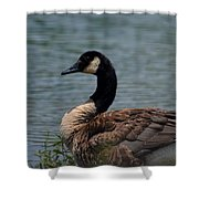 Wild Beauty - Canadian Goose Shower Curtain