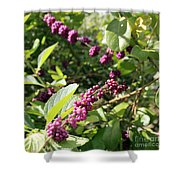 Wild Beautyberry Bush Shower Curtain