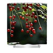 Wild Berries Shower Curtain