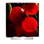 Wild Berries Of The Wetlands 4 Shower Curtain