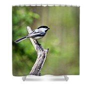 Wild Birds - Black Capped Chickadee Shower Curtain