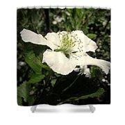 Wild Blackberry Blossom Shower Curtain