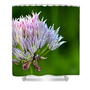 Wild Blue - Chive Blossom Shower Curtain by Adam Romanowicz