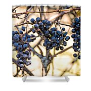 Wild Blue Grapes Shower Curtain