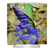 Wild Blue Hyacinth - Camassia Cusickii Shower Curtain