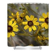 Wild Brittle Bush Flowers Shower Curtain