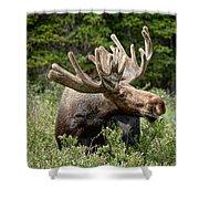 Wild Bull Moose Shower Curtain
