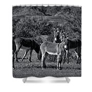 Wild Burros In Black And White  Shower Curtain